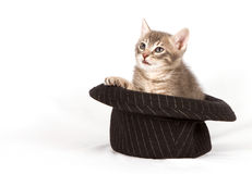 Kitten in a hat Royalty Free Stock Image