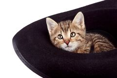 The kitten  in a hat Royalty Free Stock Image