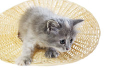 Kitten in a hat Stock Photography