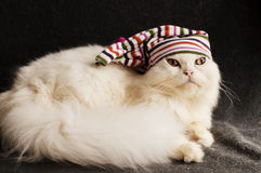 Kitten with a hat Stock Images