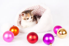 Kitten in a hat and Christmas balls. Royalty Free Stock Photography