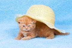 Kitten and hat. Little kitten sitting under straw hat royalty free stock photo