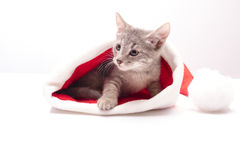 Kitten in a hat of Santa Claus Royalty Free Stock Images