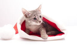 Kitten in a hat of Santa Claus Stock Photos