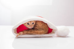 Kitten in a hat of Santa Claus Royalty Free Stock Photos
