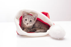 Kitten in a hat of Santa Claus Stock Images