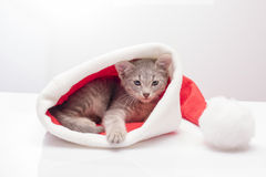 Kitten in a hat of Santa Claus Stock Photo