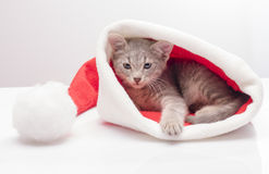 Kitten in a hat of Santa Claus Royalty Free Stock Image