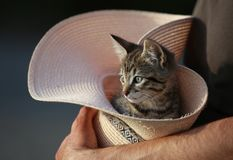 Kitten in a hat watching the surrondings. Little cat sitting in a hat and watching the surroundings. The owner holds him, therefore the kitten feels safe and Royalty Free Stock Images