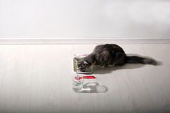 Kitten having breakfast Stock Photo