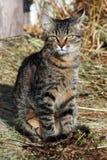 Kitten on hay. Beautiful cat, cat bask in the sun, baleen carnivores, pet, cat, predator, gray kitten, tabby cat royalty free stock photos