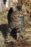 Kitten on hay. Beautiful cat, cat bask in the sun, baleen carnivores, pet, cat, predator, gray kitten, tabby cat stock photos