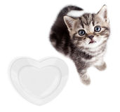 Kitten with hear plate Royalty Free Stock Image