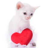 Kitten with heart Royalty Free Stock Photos