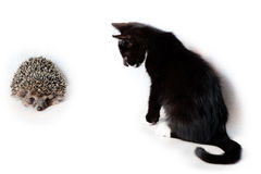 Kitten and hedgehog. Royalty Free Stock Image