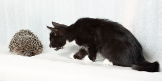 Kitten and hedgehog. Royalty Free Stock Photography