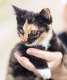 Kitten in her arms. In the park in nature stock photography
