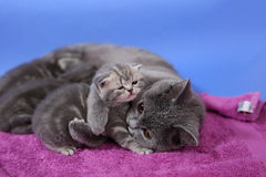 Kitten and her baby Stock Photography