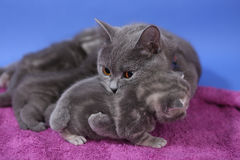 Kitten and her baby Royalty Free Stock Photos