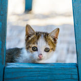 Kitten hidding behind a chair Stock Images