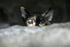 Kitten hidding behind stone wall Stock Images