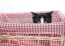 Kitten hiding. In red basket with big eyes Stock Photo