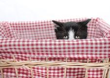 Kitten hiding stock photo