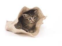Kitten hiding in a bag stock image
