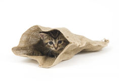 Kitten hiding in a bag Royalty Free Stock Photo