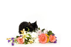 Kitten hiding behind flowers Stock Images