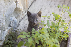 Kitten hiding behind the flowers Stock Photography