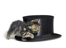 Kitten hiding behind a top hat Stock Images