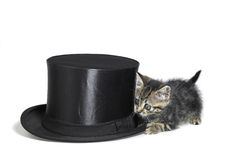 Kitten hiding behind a top hat Stock Photos