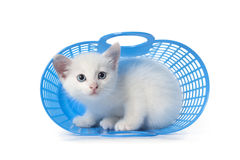 Kitten hiding in a blue plastic basket Royalty Free Stock Photo