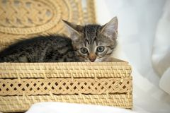 Kitten is hiding in a caged box Stock Image