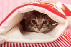 Kitten hiding in Christmas stocking. Cute kitten hiding inside of Christmas stocking on red striped background Stock Photography
