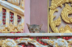 Kitten hiding on church porch Royalty Free Stock Images