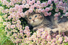 Kitten hiding in flowers Royalty Free Stock Photos