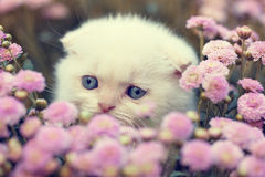 Kitten hiding in flowers Stock Photography