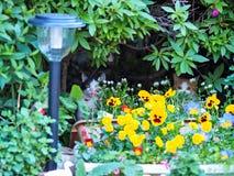 Kitten hiding in garden Stock Photo