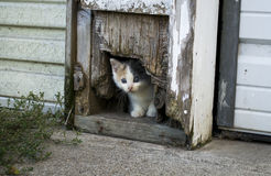 Kitten Hiding Royalty Free Stock Photos