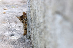 Kitten Hiding Royalty Free Stock Photo
