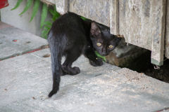 Kitten hiding under a building Stock Image