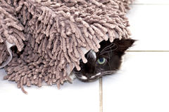 Kitten hiding under carpet Royalty Free Stock Image