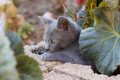 Kitten hiding under the flower leaf Royalty Free Stock Image