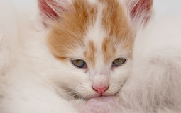 Kitten hiding Stock Images