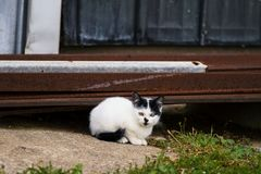 Kitten rests by a steel barn wall, waiting for a mouse!. Kitten hiding under a steel wall Stock Image