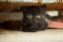 Kitten Hiding unter dem Sofa Lizenzfreie Stockfotos