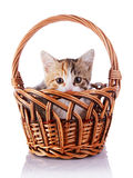 Kitten hiding in a wattled basket. Stock Photos