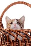 Kitten hiding in a wattled basket. Stock Photos